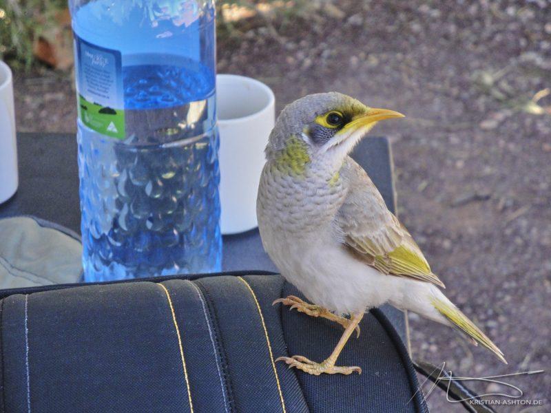 Glen Helen Gorge - the early bird