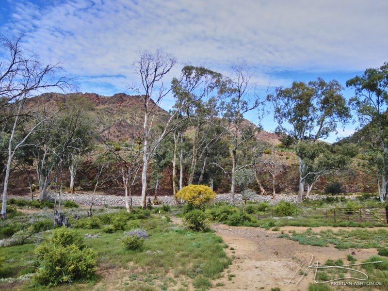 The Flinders Ranges - Parachilna Gorge