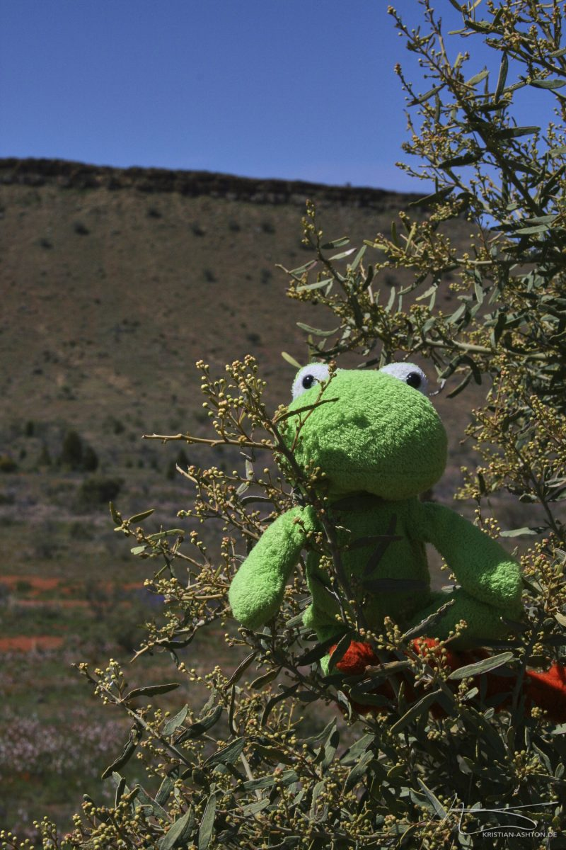 """The Flinders Ranges - Mr. Frog at the """"Great Wall of China"""""""