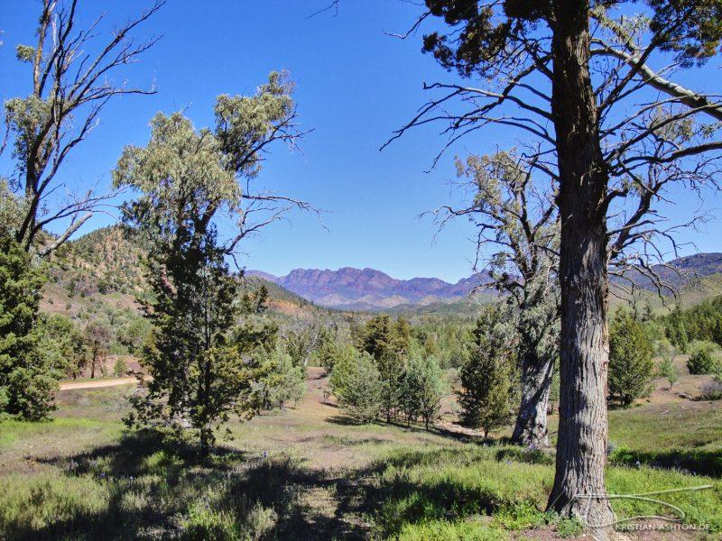 The Flinders Ranges - Twin Gums Lookout