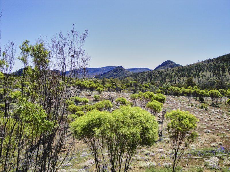 The Flinders Ranges National Park