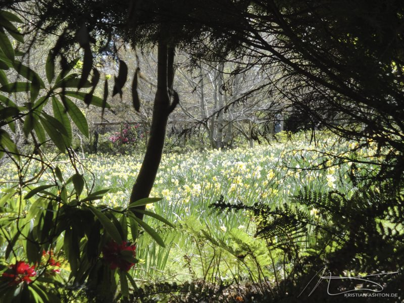 Forest Glade gardens, Mt. Macedon