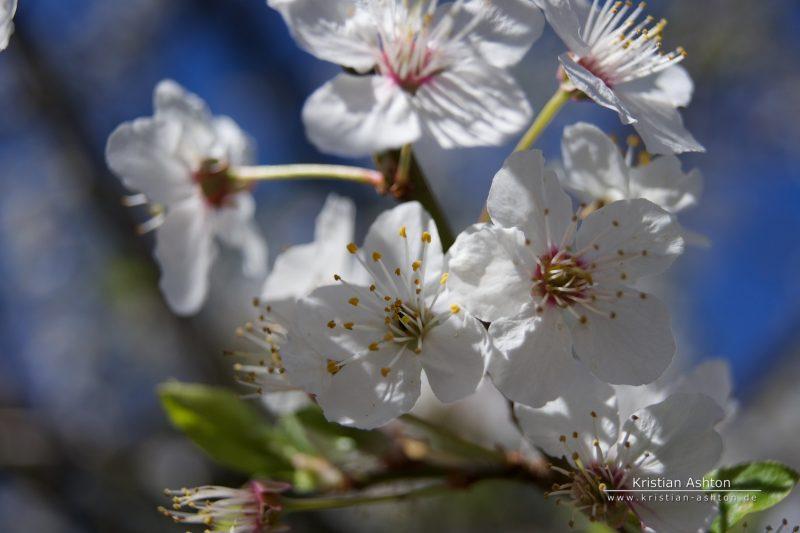 Spring in Stuttgart
