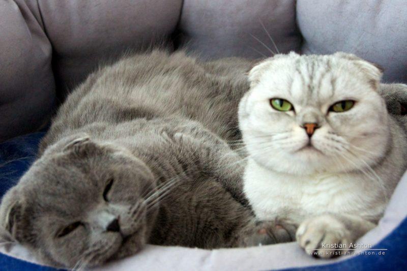 Let us sleep! - Tomsk and Holunderle