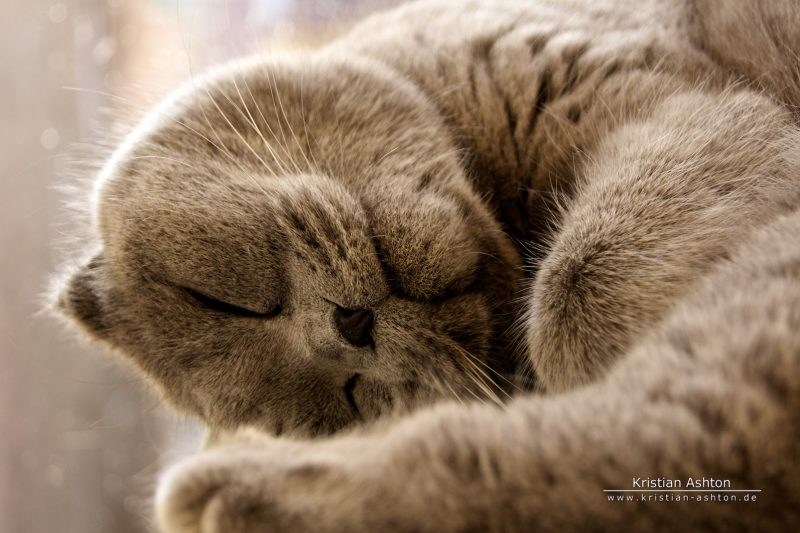 Tomsk enjoying his well-earned rest