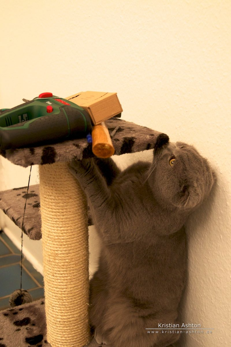 Tomsk the builder prefers Bosch power tools