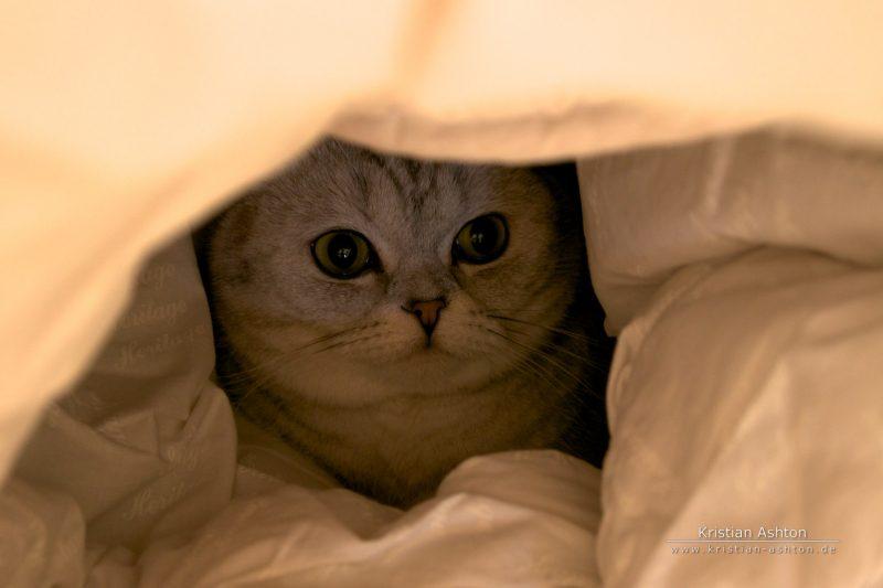 Holunderle playing hide-n-seek in the duvet