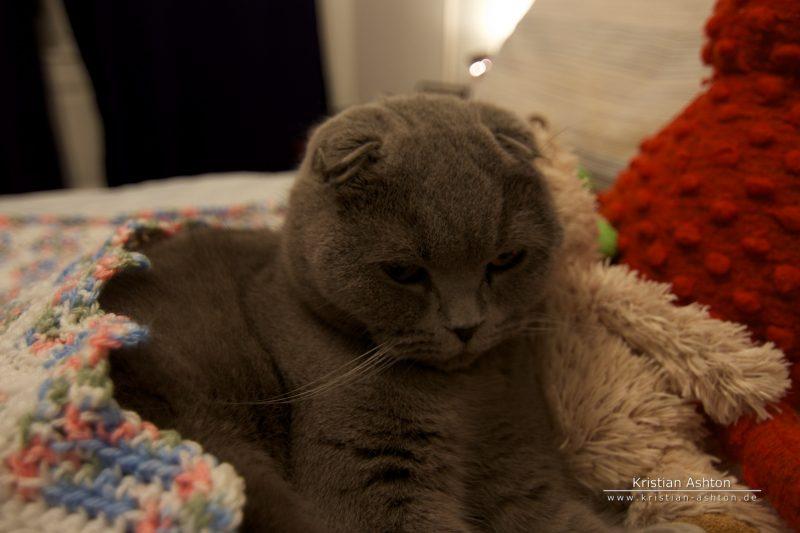 Sleepy Tomsk