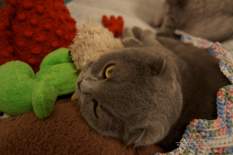 Tomsk relaxing with Mr. Frog and Ralphy B. Bear