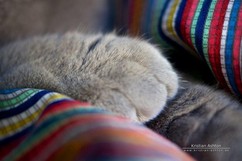Tomsk's paw
