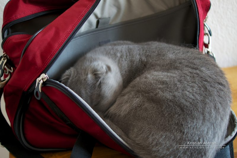 Tomsk loves bags!