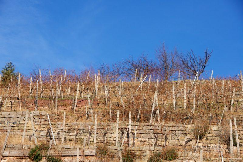 Vineyards in Stuttgart South