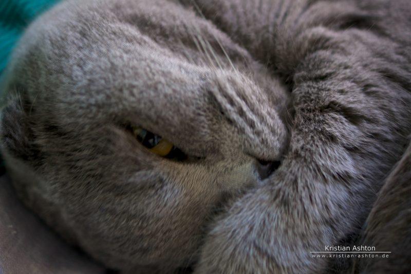 Tomsk - let me sleep!