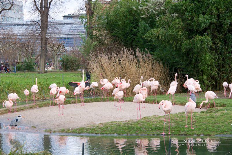 The Wilhelma zoological and botanic garden