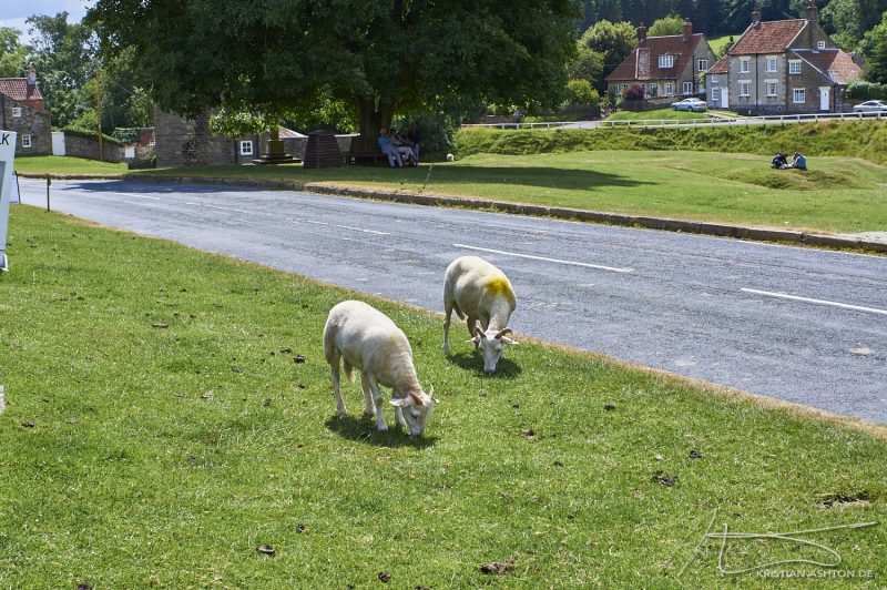Sheep in the main street of Hutton-le-Hole