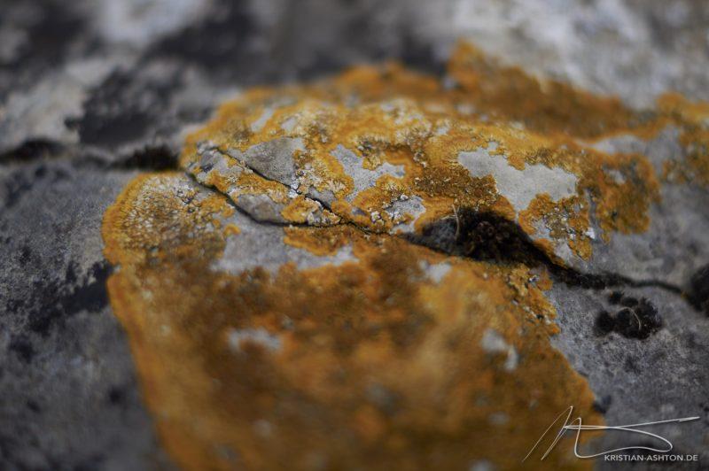 "Pickering Castle - ""Lichen"""