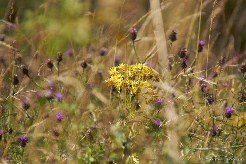 Pickering Castle - Flora
