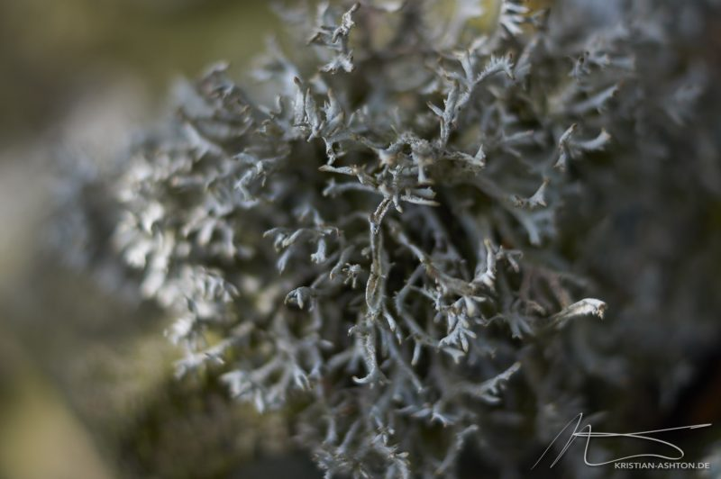 "Hike on the North York Moors - ""Lichen"""
