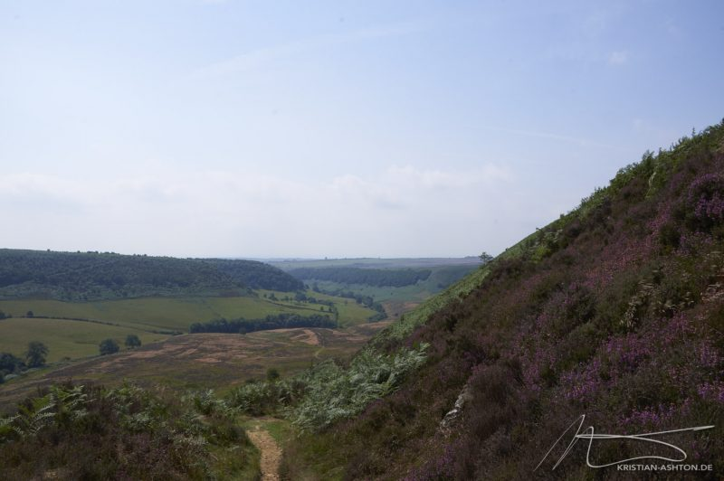 Hike on the North York Moors between Pickering Beck and Levisham Beck