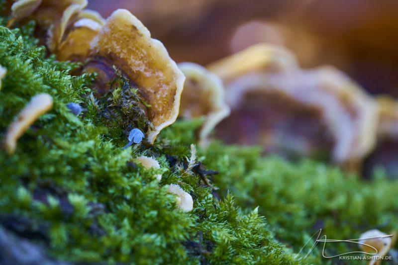 Silberwald Herbst-Impressionen