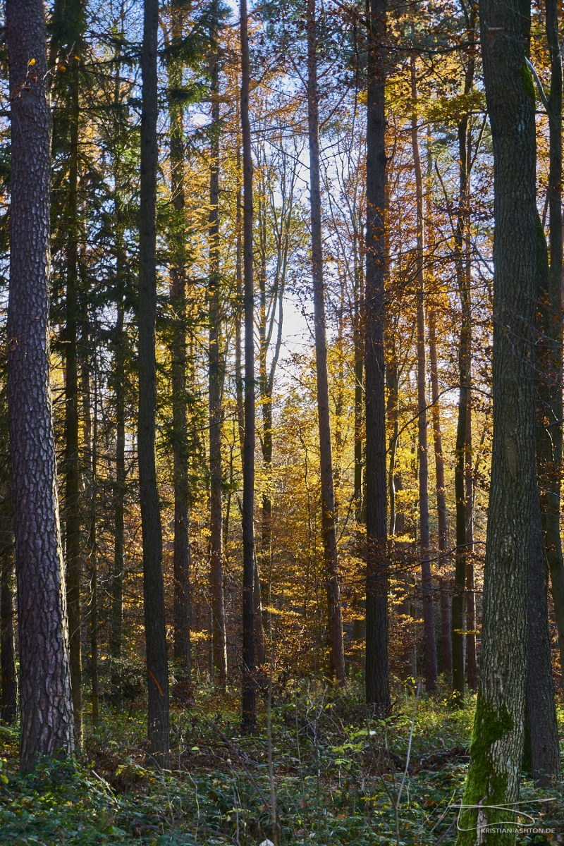Autumnal impressions of the Silberwald