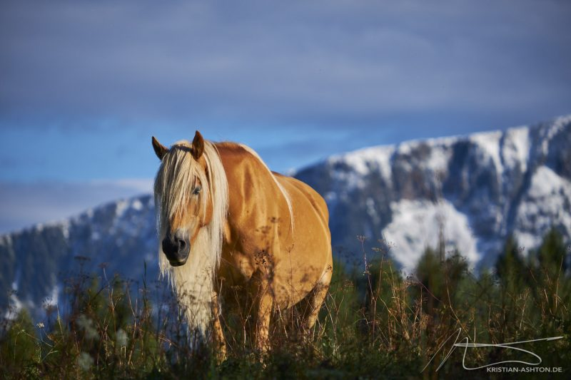 A beautiful horse along the panorma trail