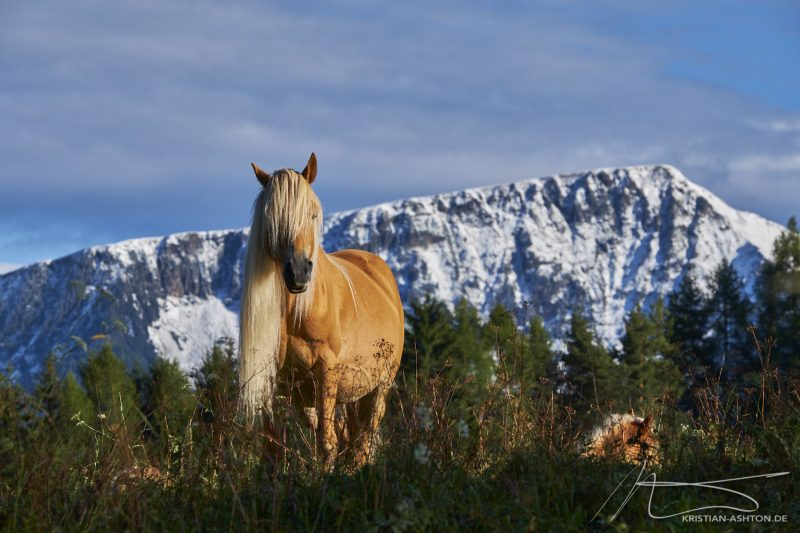 Beautiful horses along the panorma trail