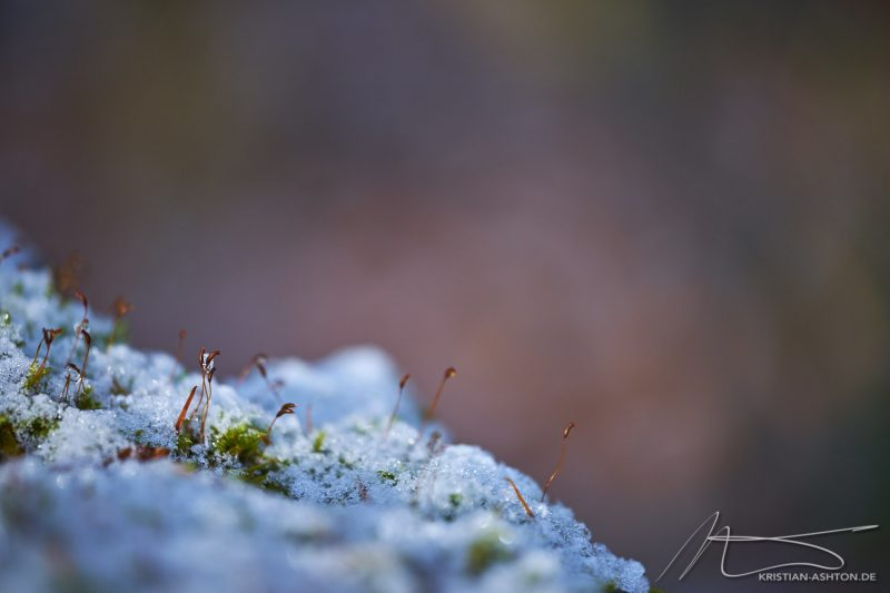 """Playing"" with my new Fuji 80mm macro in Silberwald forest"