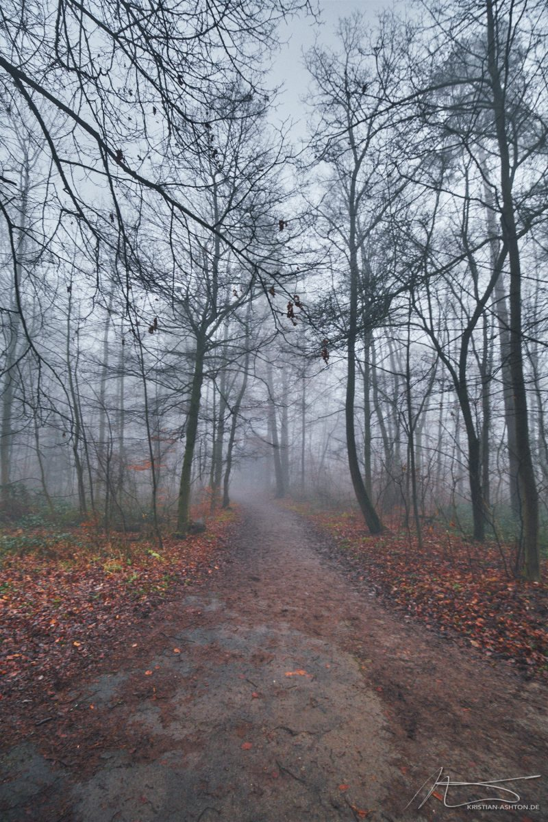 Foggy atmosphere at the Birkenköpfle