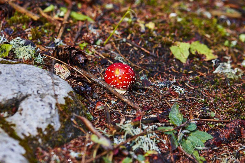 Fungi by Lake Carezza