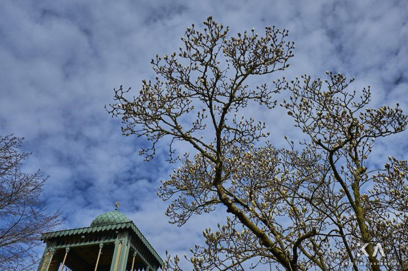 The magnolias are beginning to bloom in the Moorish garden of the Wilhelma