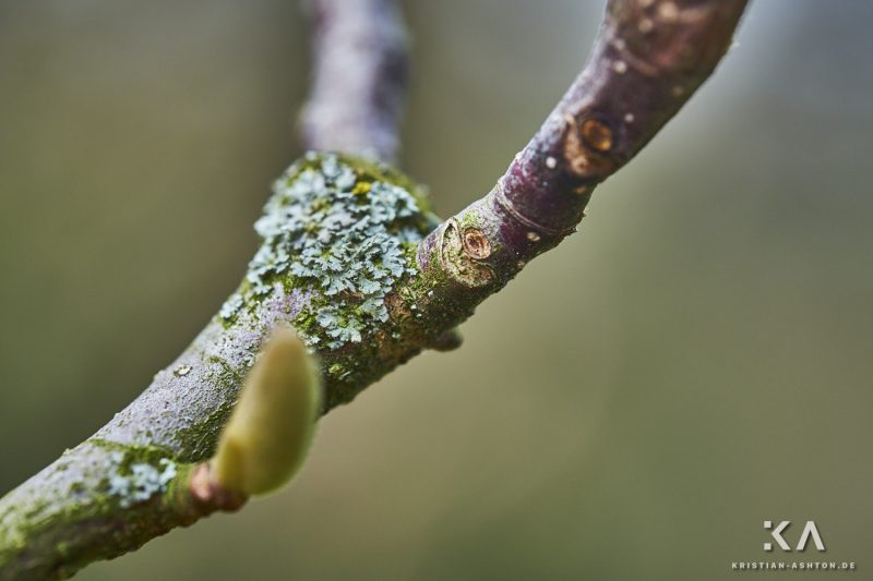Moss and lichen in the Moorish garden of the Wilhelma