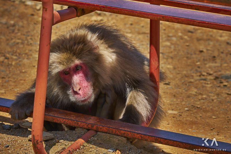 Arashiyama Monkey Park Iwatayama