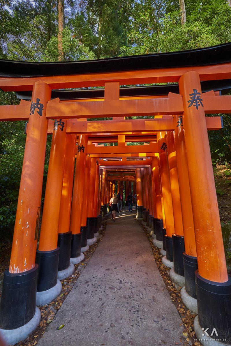 The innumerous red torii (gates) that lead through Fushimi Inari Taisha
