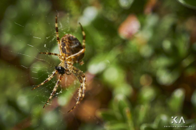 Hike from guesthouse Schönblick to the mountain summit Völseggspitze - a spider awaits its prey