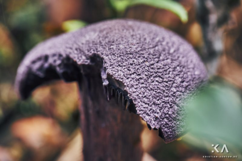 Fungi along the Pfösl panorama path