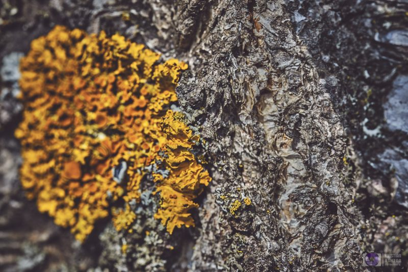Lichen along the roadside in Deutschnofen